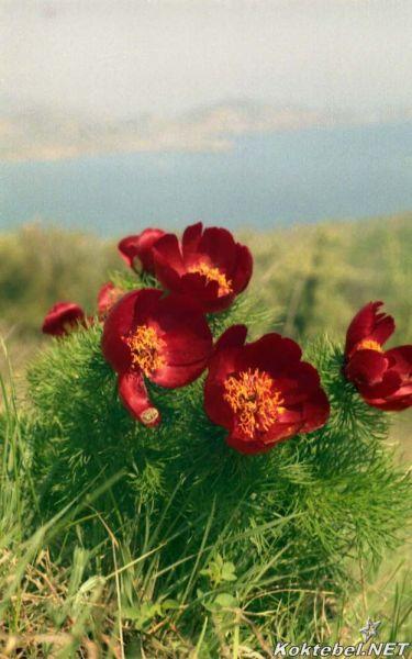 Смешивание красок лилия hbceyjr